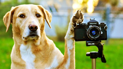 SPC Pet Photo Shoot